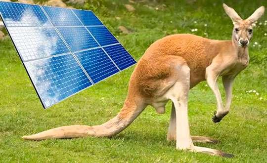 Вместо сметания продуктов с полок супермаркетов австралийцы решили заблаговременно озаботиться энергонезависимостью собственных жилищ